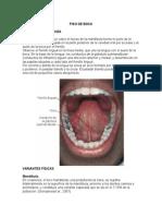 orofaringe piso de boca
