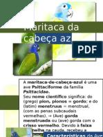 Maritaca Da Cabeça Azul