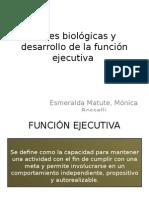 Bases Biológicas y Desarrollo de La Función Ejecutiva