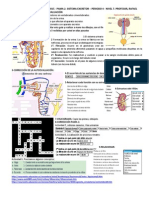 Pama 2 Xa 7 p4 PDF
