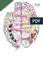 brain visual representation