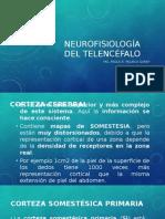 Neurofisiología del Telencéfalo2.pptx