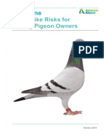 Bird Strike Risks For Racing Pigeon Owners Adelaide Airport