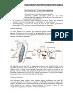 embriologia del testiculo.pdf