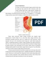 1 Anatomi Dan Fisiologi Peritoneum