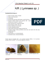 SIPUT AIR (LYMNAEA SP.)
