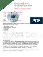 8° bas.celula e informacion genetica 2010 marzo