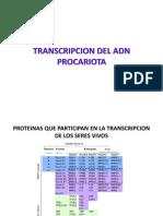 4_Transcripción Del ADN(1)
