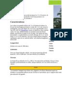 ARBOLES DE LA PROVINCIA DE OXAPAMPA 2015.docx