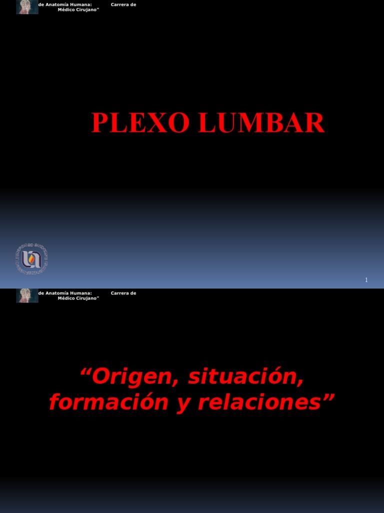 Exposicion de Plexo