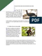 Especies Peruanas en Peligro de Extensión Del Peru
