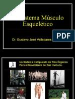 El Sistema Músculo Esquelético