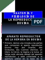 Anatomía y Fisiología de Reproduccion