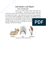 skeletal system lab report - google docs