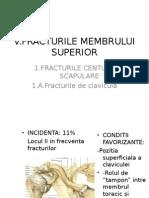 5.1 Membrul Superior