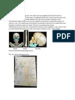 skeletal lab report - google docs