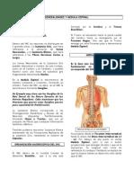Part 2 General Ida Des y Medula Espinal