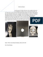 skeletal lab report - google docs