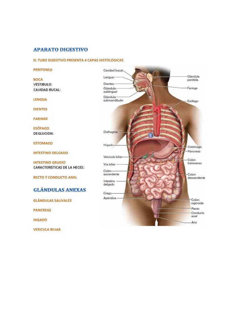 APARATO DIGESTIVO doc cap 3.pdf