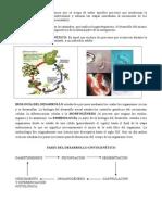 Embriología Historia