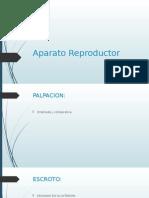 Aparato reproductor Masculino - Suros