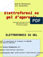 4AS elettroforesi  agarosio