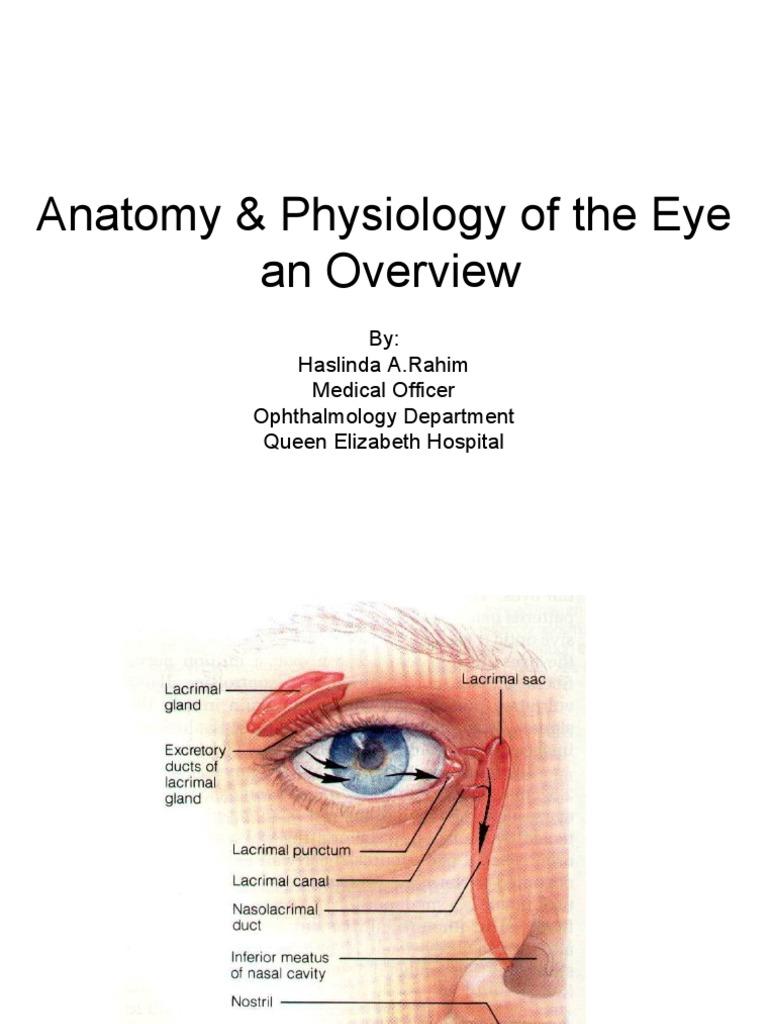 Anatomy & Physiology of the Eye | Human Eye | Retina