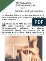 Articulación ATM