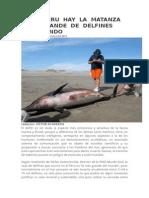 Delfin en El Peru