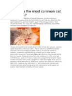What Are the Most Common Cat Diseases