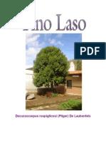 Pino Laso