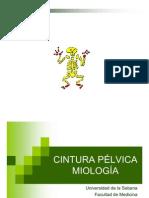 Cintura Pélvica