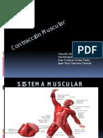 Contracción Muscular.