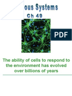 Ch 49 Nervous systems.ppt