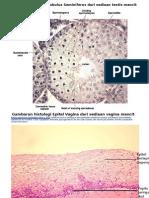 Gambaran Histologi Tubulus Seminiferus Dari Sediaan Testis Mencit