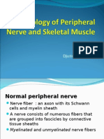 Pathology of Peripheral Nerve and Skeletal Muscle - DA