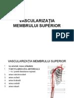 vascularizatia membrului superior