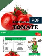 Cultivo del tomate de guiso