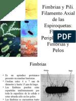 Fimbrias, Pili, Espiroquetas
