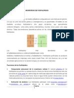 Biosintesis de Fosfolipidos y Esfingolip