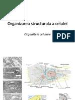 CC3_Organite celulare