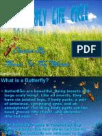 Butterfly HASAN