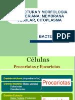 3.-MEMBRANACITOPLASMATICA-1.ppt