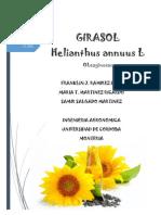 Helianthus annuus martes