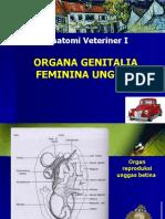 Organa Genitalia Feminina Unggas