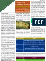 Identificacion Familias Termitas Blattaria Isoptera El Salvador