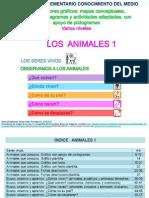 Proyecto Animales1 Observamos Analizamos Clasificamos