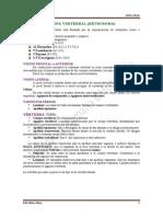 Px1.- Columna vertebral. Músculos del dorso