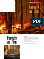 forests on fire