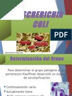 E. Coli Patogenos